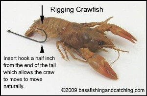 How to Hook a Live Crawfish