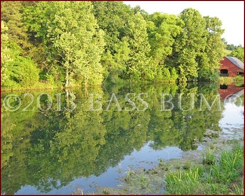 Farm Pond Beauty