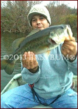 Bookend Largemouth Bass #1