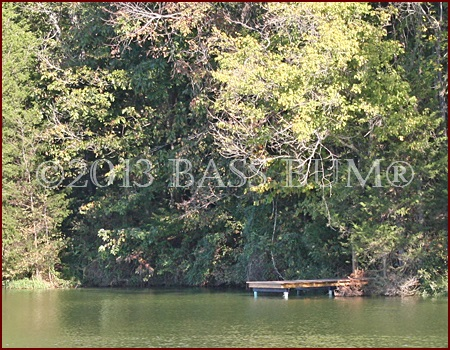 Farm Pond Dock - 2.5 Acre Pond