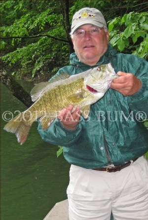 Smallmouth Bass  The Judge
