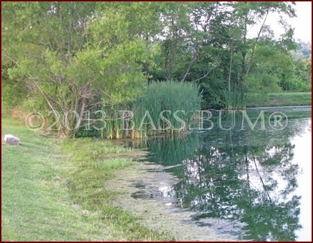 Pond Habitat Holds Much Bass Forage