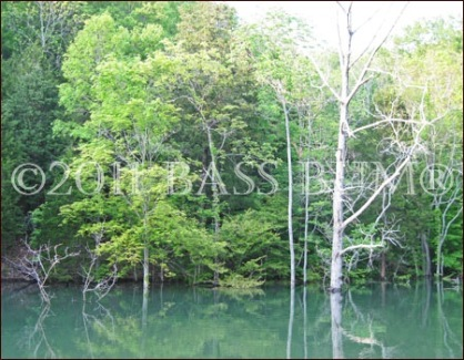 Fishing for Bass - Trees in Shallow Water