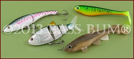 Fishing Swimbaits, Using A Swimbait Rod For Bass Swimbaits
