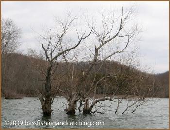 Winter Bass Fishing Cover